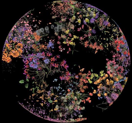 "Jennifer Steinkamp, ""Botanic 2"", 2016, computer-generated animation, dimensions variable"